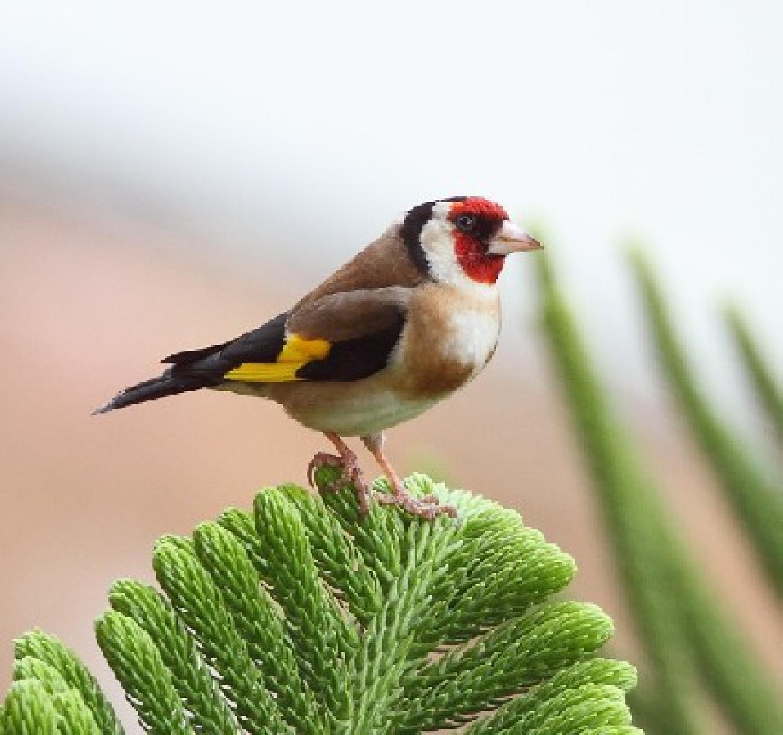 Des douaniers à Oujda empêchent la traite de 1 680 oiseaux