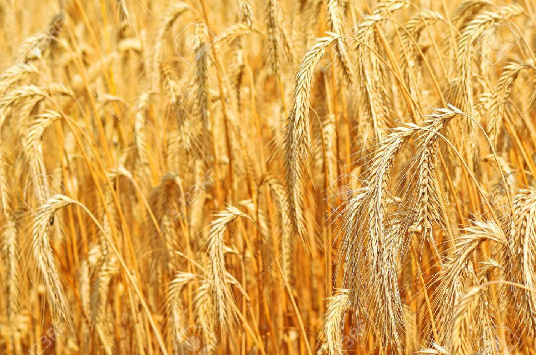 Le Maroc produira un surplus d'agrumes, de produits laitiers et d'oeufs au cours des 5 prochaines années