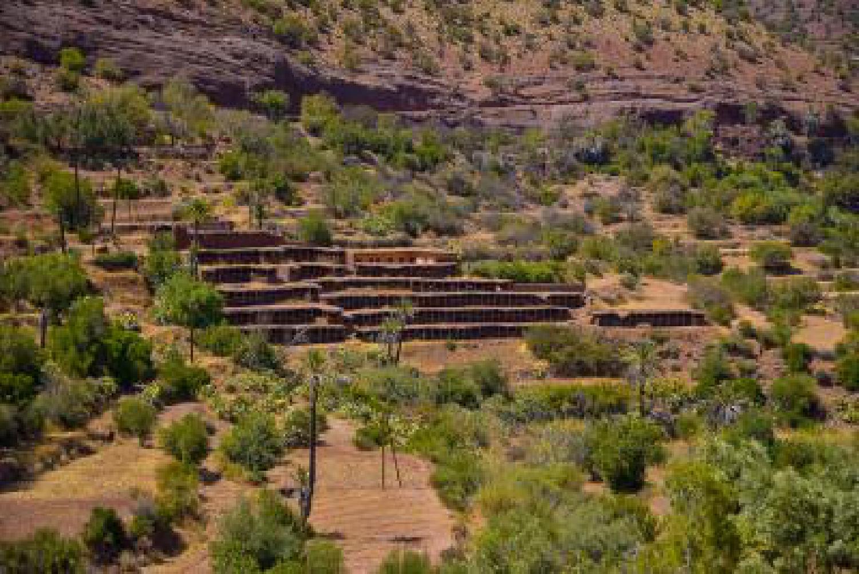 Bienvenue à la plus grande cour à abeilles traditionnelle du monde, au rucher Inzerki du Maroc