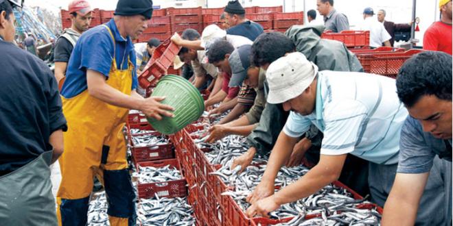 Sardines : 1 er prix des scandales socio-économiques marocains