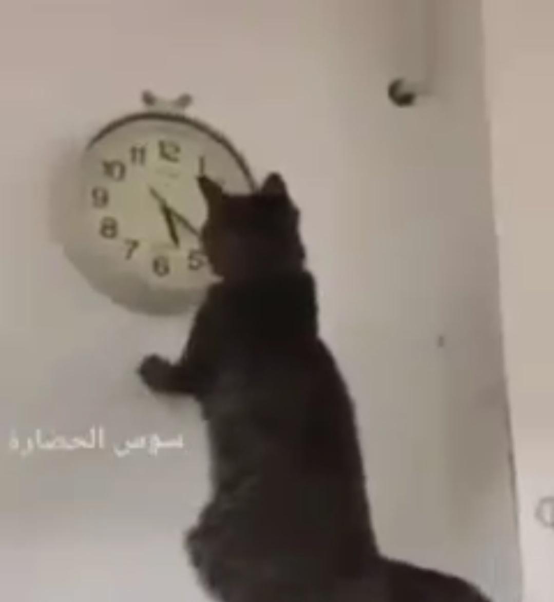 L'heure du couvre-feu du gouvernement marocain est sans précédent. Ubuesque ou géniale ?