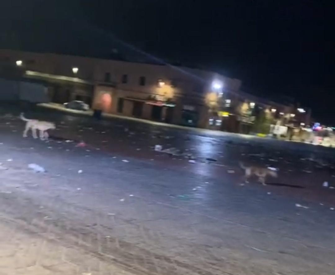 Jamaa el Fna . Place d'ordures et de chiens errants